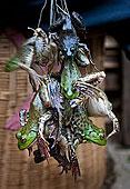 青蛙,出售,市场,元阳,中国