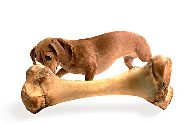动物骨头工艺品