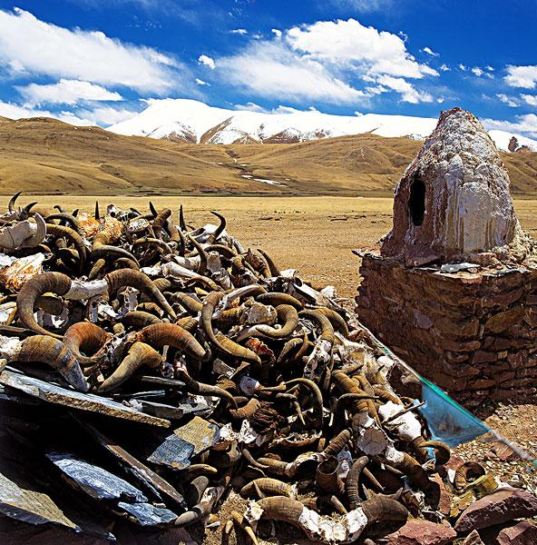 西藏,鹿角