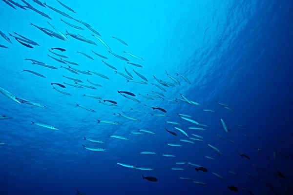 海底鱼群带颜色的简笔画