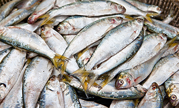 动物 鱼 鱼类 600