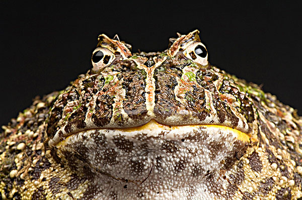 青蛙,动物园-全景图片-读图时代