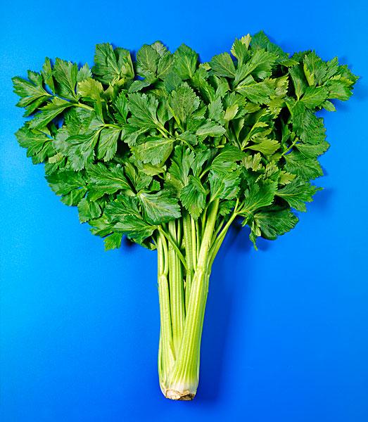芹菜,叶子