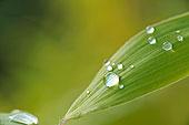 叶子,水滴