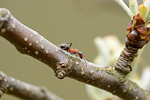和蚂蚁相似的动物