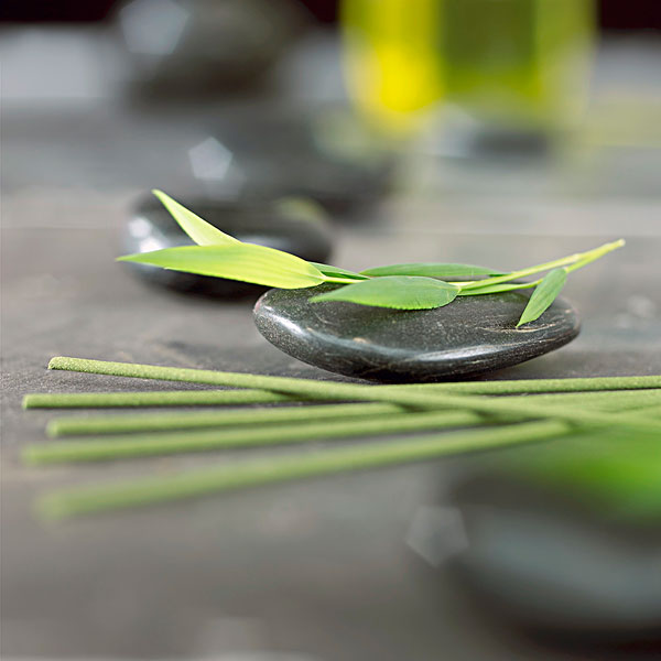 >竹子图片