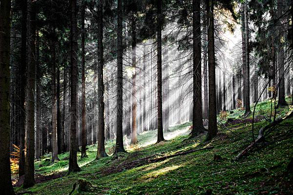 太阳光线,树林,图林根州
