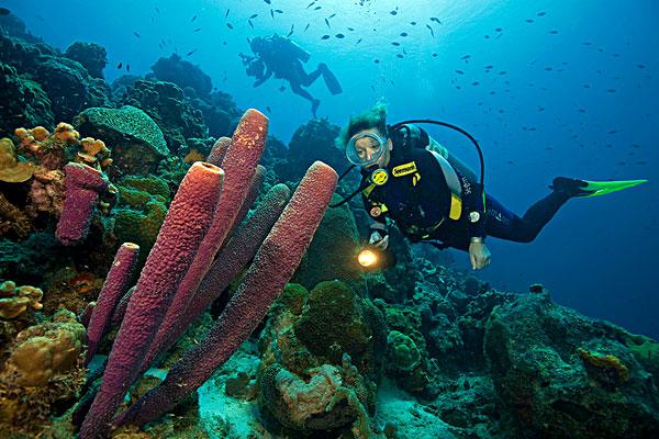 海底世界图片-海底世界图片图片下载-海底世界图片