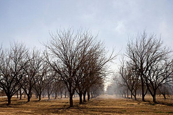 早,早晨,雾,山核桃,小树林,亚利桑那,美国