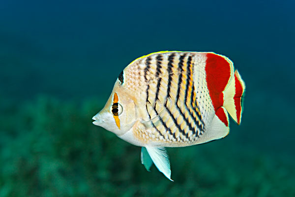 动物 昆虫 鱼 鱼类