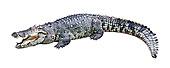 鳄鱼,隔绝