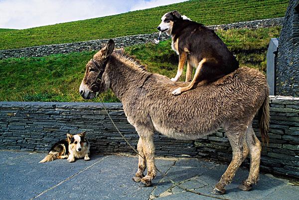 不同动物接吻图片大全