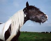 黑白/黑白相间的马下载相似预览购买