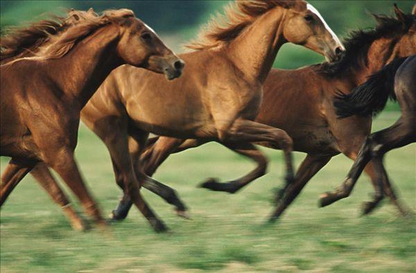 马的图片_马的图片大全_全景网