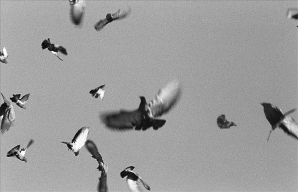 飞行中的鸟类