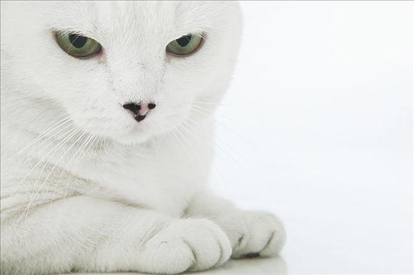 猫爪片大全可爱壁纸