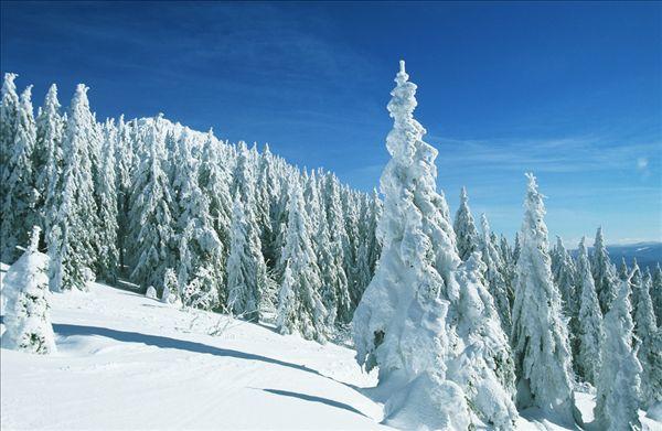 漂亮,冬景图片