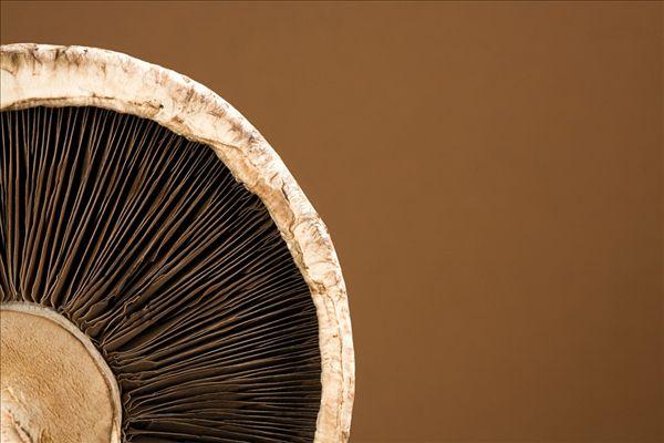 蘑菇钢结构房子设计图