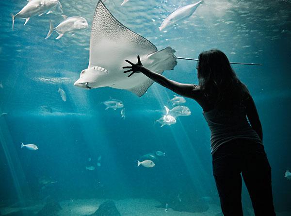 壁纸 海底 海底世界 海洋馆 水族馆 600_445