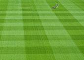 割草,青草,体育场