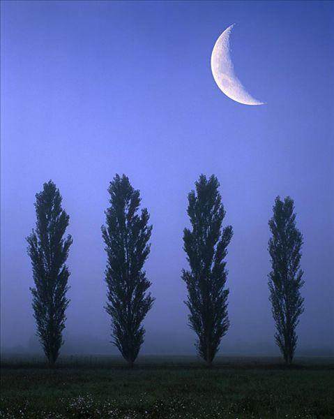 月亮,夜晚,序列 竖