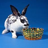 更多 推荐 哺乳动物/家兔,比赛,黑白,序列,...下载相似预览购买...