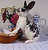 黑白 哺乳动物/咖啡桌,家兔,比赛,黑白...下载相似预览购买