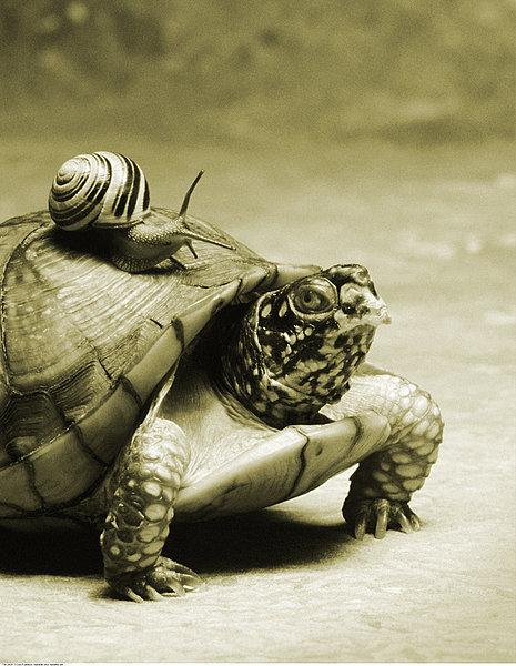 ... 龟 壳 样式 这 只 乌龟 盾 壳 形似 山峰 乌龟 怎么 吃