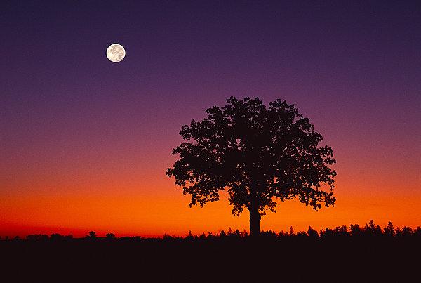 标题: 橡树 标签: 剪影,橡树,满月,黄昏,魁北克,加拿大 描述: 剪影,橡树,满月,黄昏,魁北克,加拿大 英文描述: Silhouette of Oak Tree with Full Moon at Dusk Quebec, Canada 摄影师: Mark Tomalty 图片编号: mf700-00014143 版权属性: 肖像权(不需要肖像权) 授权类型: 版权管理类(RM)图片 最大尺寸: 50M(RGB),5100x3427像素