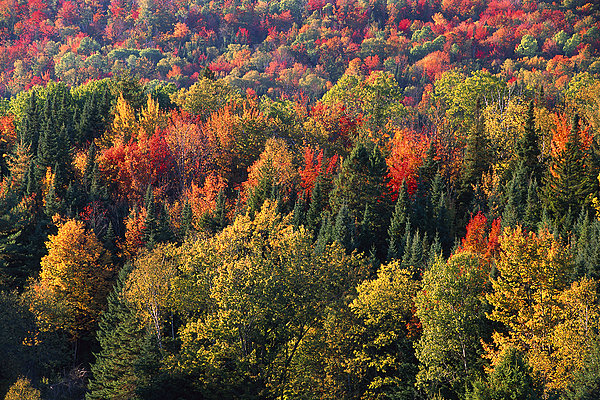 俯视,树,州立公园,新罕布什尔