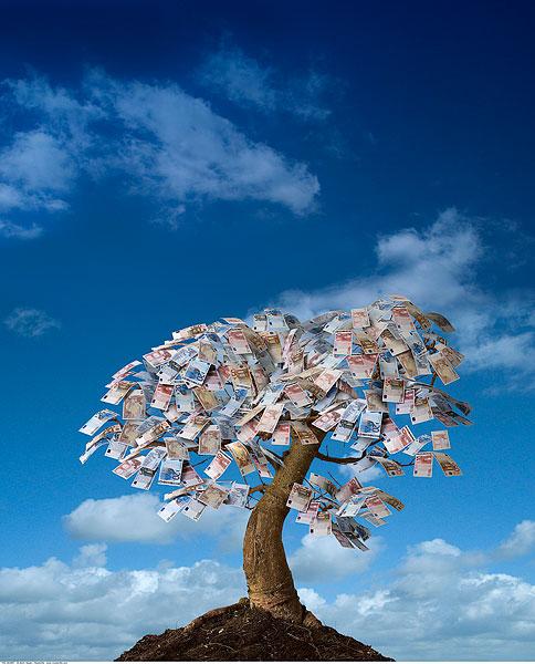 欧元钞票,树上-全景图片-读图时代