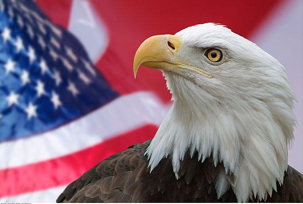 世界有动物的国旗
