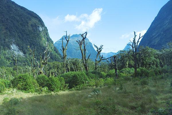 树,山脉,背景,俯视图