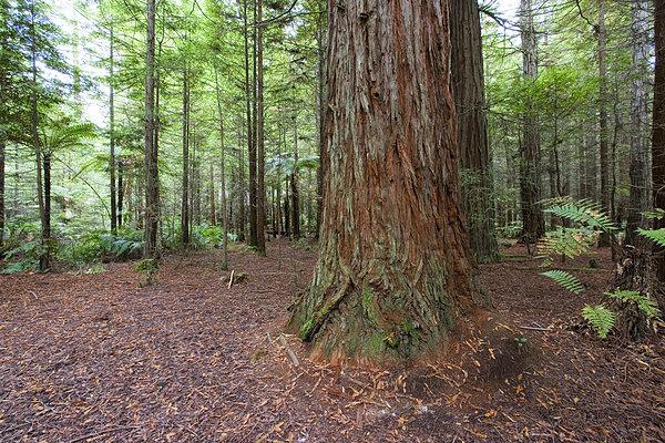 树皮,树林,俯视图