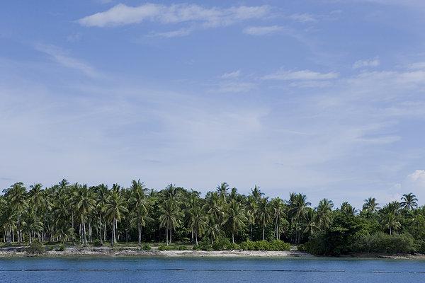 棕榈树,海洋,俯视图