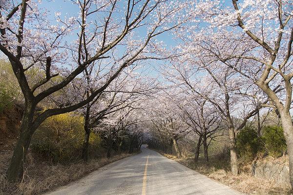 道路两旁的树木_全景图片
