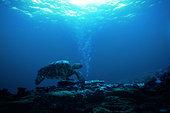 海龟,深海,泡泡