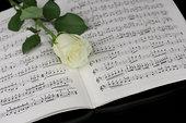 玫瑰,音符,特写