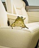 青蛙坐在汽车