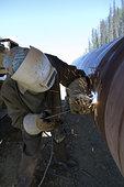 焊接,工作,管道,建筑,西部,艾伯塔省,加拿大