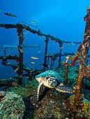 玳瑁,平台,失事船舶,基拉戈岛,佛罗里达