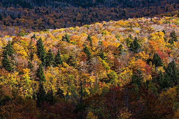 图片标题:俯视,树林,佛蒙特州,美国