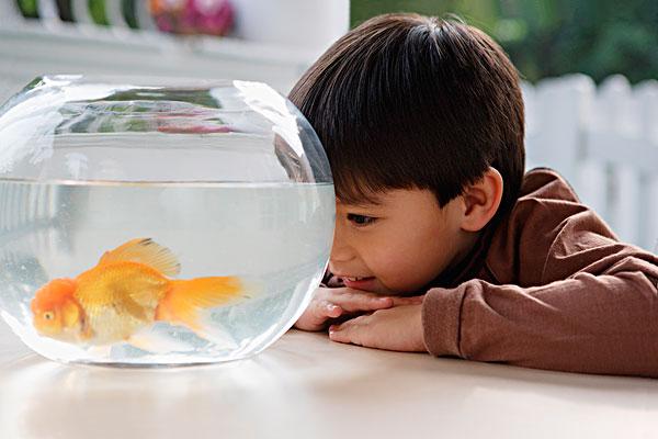 男孩,看,金鱼缸