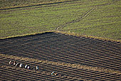 工人,种植,农场,地点,河岸,望濑,传说,区域,缅甸