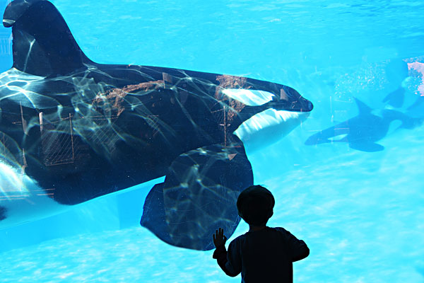 海洋动物-海洋动物图片下载-海洋动物图片大全-全景网