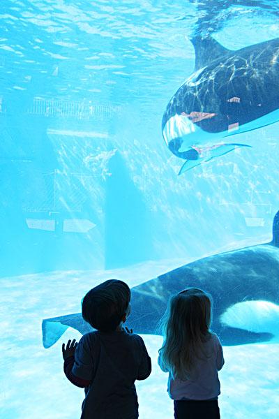 海洋动物-海洋动物图片下载-海洋动物图片大全-全景