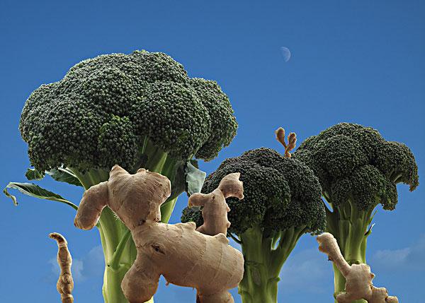 蔬菜创意动物造型