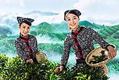 两个东方女孩在茶园采茶