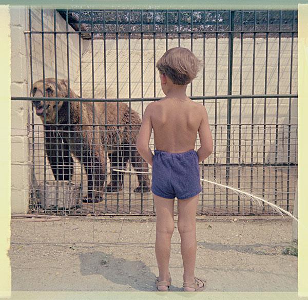 伤心孤独的动物的图片