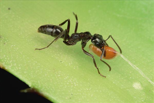蚂蚁,种子,背影,窝,吃,切片食物,植物,生长,新,花园